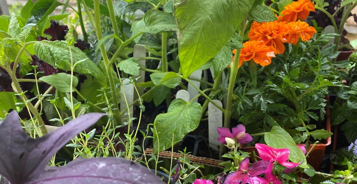 blog garden